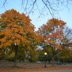 Ah, o outono…