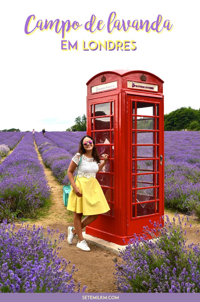 Campo de lavanda em Londres - Mayfield Lavender Farm